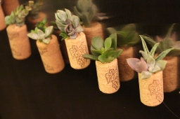 14 New Succulent Cork Magnets